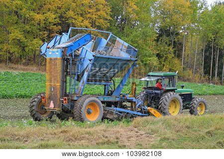 Sugar Beet Harvest In October