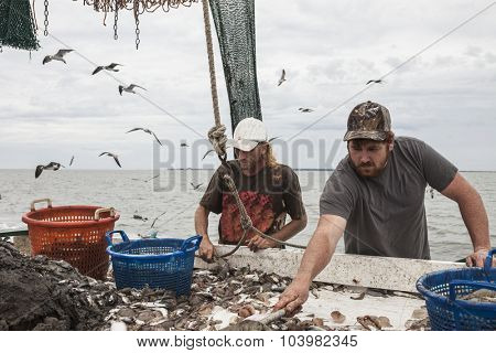 Commercial fishermen sorting catch of shrimp on board ship poster
