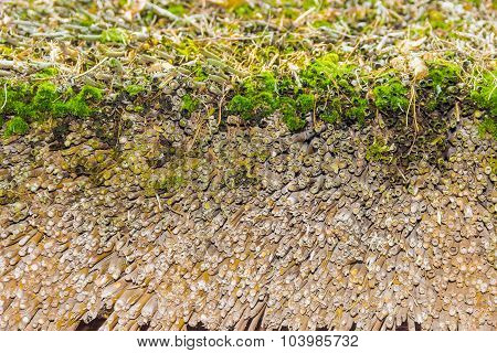 Fragments of old thatched roof made of wheaten straw covered with green moss poster