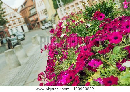 Flowerbed Of Purple Flowers In The Historic City Center