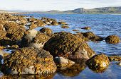 Boulders on the Barents Sea coast covered with brown algae. Sunny summer day poster