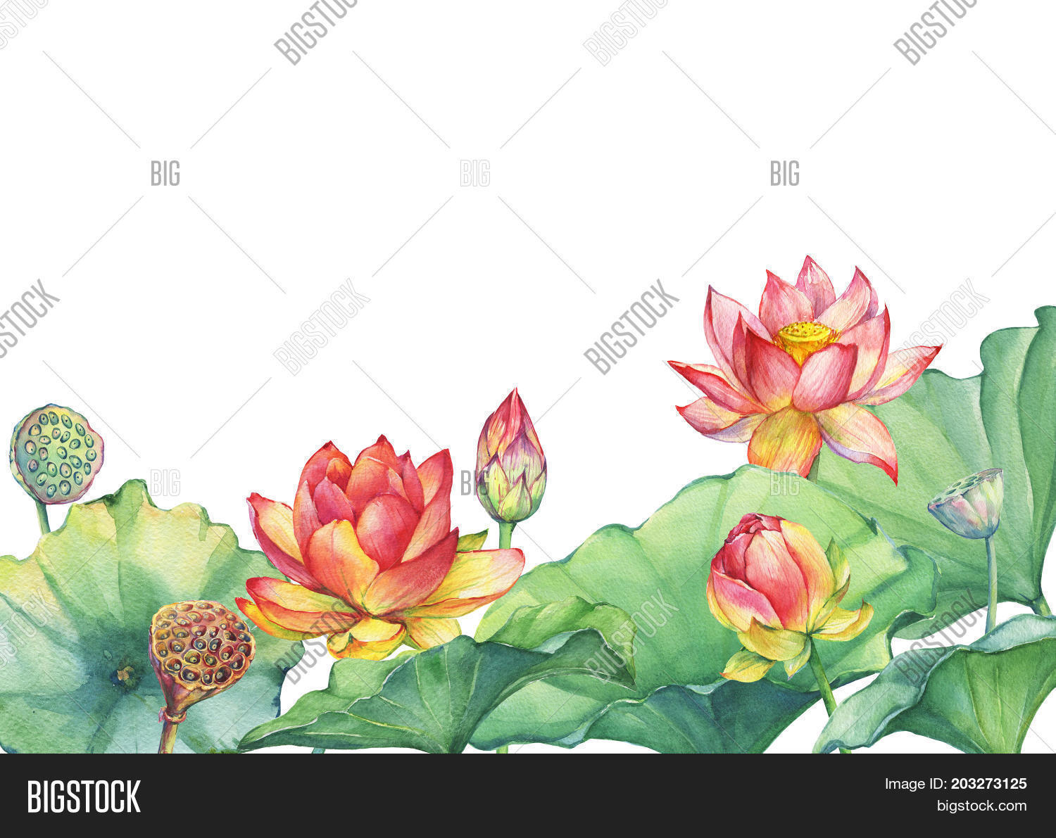 Banner border pink image photo free trial bigstock banner border of pink lotus flower with leaves seed head bud water izmirmasajfo