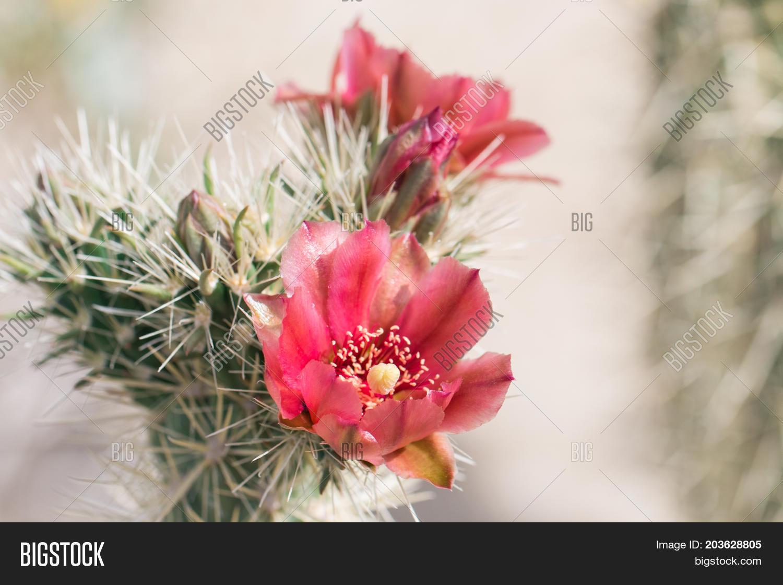 Beautiful Blooming Image Photo Free Trial Bigstock