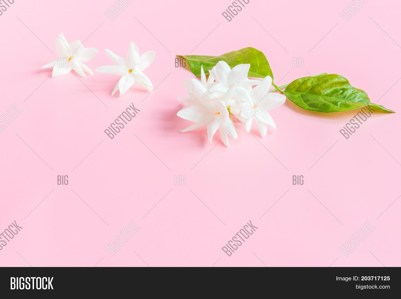 White Jasmine Flowers Image Photo Free Trial Bigstock