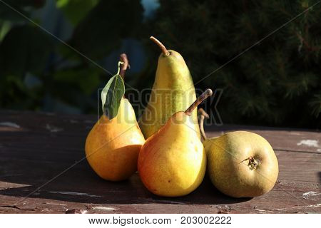 Fresh, juicy , tasty organic pears on old wooden table. Free space for text. Autumn nature concept. It looks like an oil painting.Blurred background