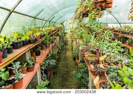 Succulents and cactus blooming flowers in hothouse