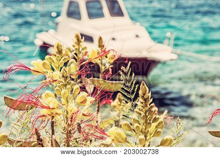 Beautiful freesia flowers and little boat in Maslinica Solta island Croatia. Summer vacation destination. Seasonal natural scene. Red photo filter.