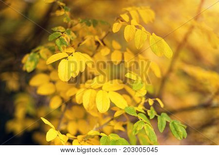 Autumn yellow leaves background in autumn park. Season change concept, nature welcoming autumn