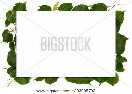Frame With Spring With Linden-tree Leaves, On White Background