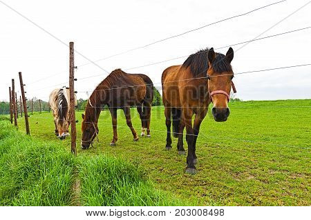 Fence under electric current surrounding the horse farm. Brown Holland horses looking over the fence