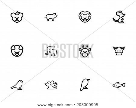 Set Of 12 Editable Zoo Outline Icons. Includes Symbols Such As Predator, Cougar, Lion And More