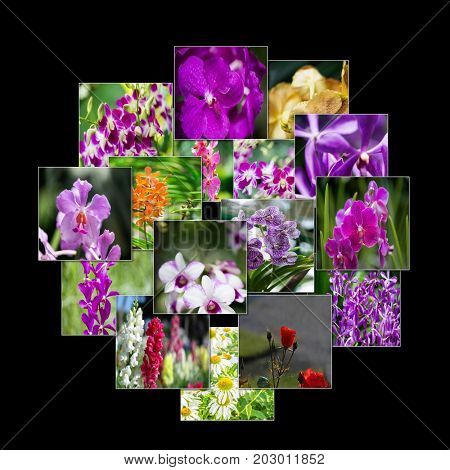 Collage of various flowers in nature concept