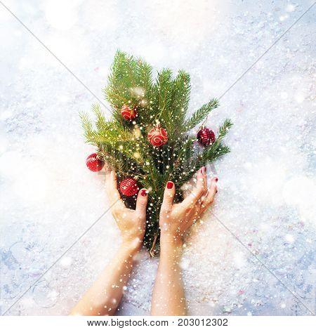 Female Hands Festive Christmas Green Fir Branches