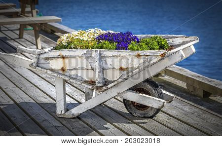 Vintage white wooden cart decorated with blooming flowers