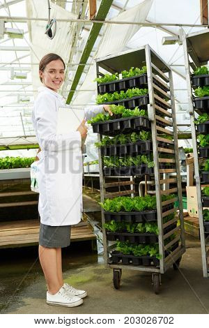 Happy researcher in whitecoat studying new sort of lettuce grown in hoyhouse