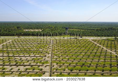 Aerial View Of Palm Plantation With Dramatic Blue Sky At Background.