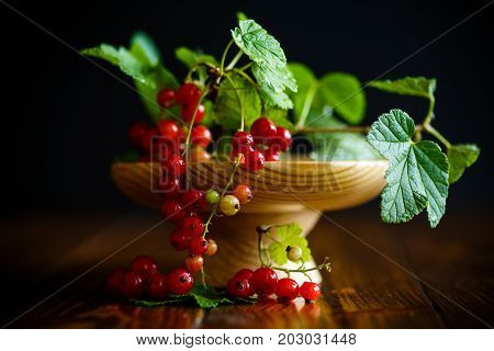 Fresh red currant on a black background