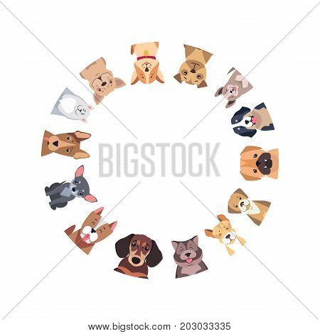 Circle of different purebred dogs. Vector of Bernese Mountain and Central Asian hounds, French and English Bulldog, Chihuahua and boxer, Jack Russell and Bull Terrier, puppy of Argentinian Dog.