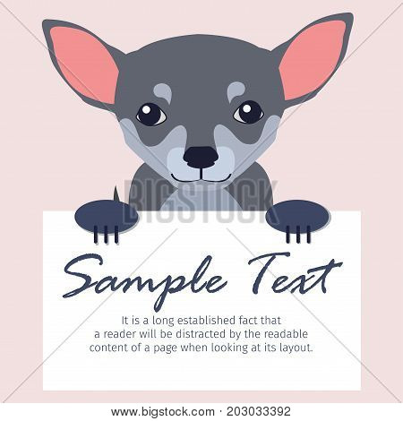 Small Chihuahua holds signboard with text isolated on peach background. Friendly decorative mini dog breed vector illustration. Cartoon smooth-haired domestic animal with cowardly character.