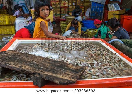 SIHANOUKVILLE CAMBODIA - 7/20/2015: A young girl watches as others sort through shrimp brought in by fishermen in a fishing village.