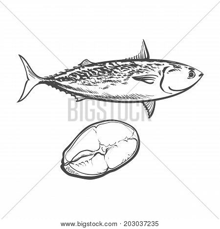 vector sketch cartoon sea fish tuna. Isolated illustration on a white background. Sea delicacy food concept