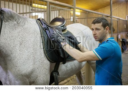 Handsome man in gloves sets saddle on white horse in harness in stable