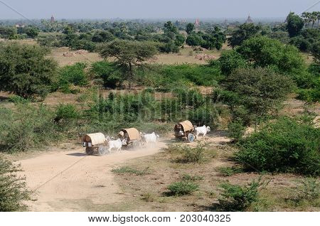 Pilgrims in an ox carts are going to ruins of ancient temples in Bagan Myanmar