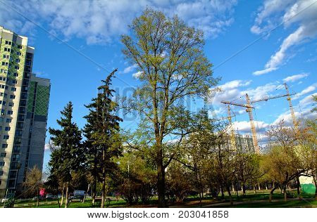 a tree growing in yard of Moscow in spring