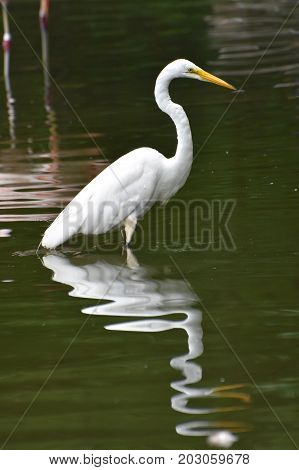Cool Shot of the Reflection of a Heron