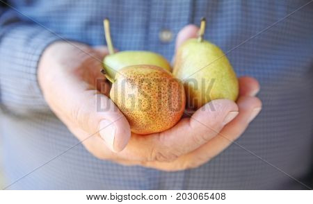 A man with three small ripe pears