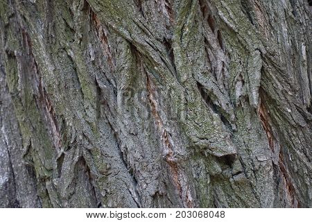 Close Up Of Surface Of Tree Bark