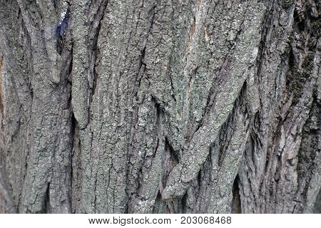 Close View Of Surface Of Tree Bark