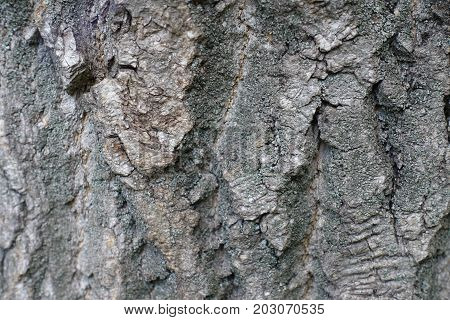 Texture Of Rugged Old Tree Bark Surface