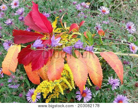 Red leaves and flowers in forest of Thornhill Canada September 3 2017