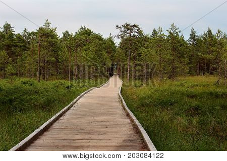 Walking road made of wooden planks in the deep bog-forest.