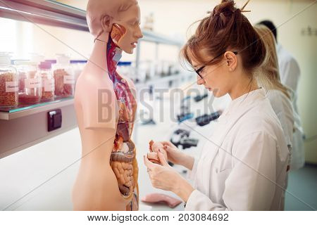 Female student of medicine examining anatomical model in lab