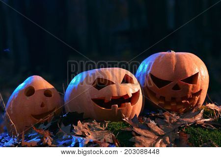 Close up of hand made three different orange pumpkins, fun, surprised and angry, with big eyes and funny smile. Prepare for Halloween party, decoration among yellow leaves in forest.