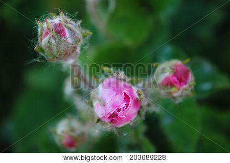 flower, pink, nature, garden, rose, plant, blossom, green, bloom, spring, flora, macro, flowers, red, summer, bud, tree, petal, closeup, blooming, beauty, purple, floral, leaf, petals