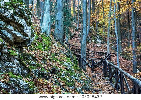 Hiking path with railing in the autumn deciduous forest. Seasonal natural scene. Tourism theme. Vibrant colors.