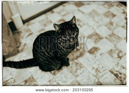 Black and white photo of tabby cat sitting on checkered floor in kitchen.