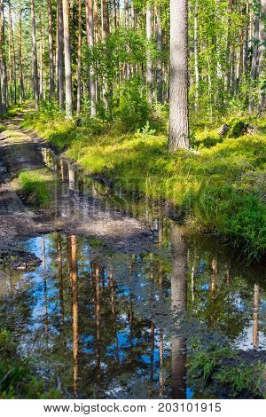 landscape of the dirt forest road and reflection of trees in puddle water on a track