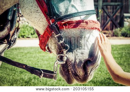 A hand reaching out to pet the nose of a horse.