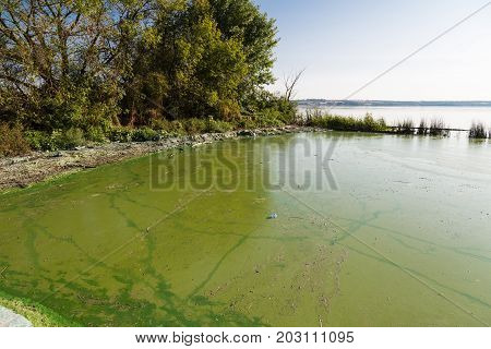 Dirty green water in the reservoir. Contamination by toxic algae in water surface. Ecological catastrophy. Concept of environmental pollution and protection of ecology.