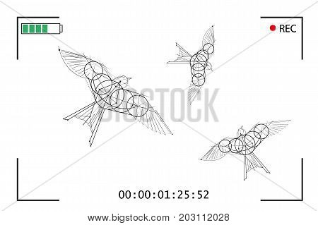 Video camera shoots flying birds. Screen video on white background with flying birds. Vector