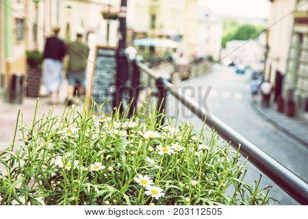 Flowerpot with daisies in main street in old mining town Banska Stiavnica Slovak republic Unesco. Travel destination. Urban scene. Beauty photo filter.