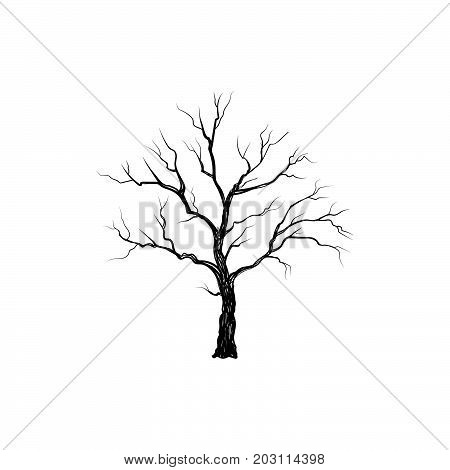 Tree without leaves isolated. Winter Nature sign  Silhouette illustration