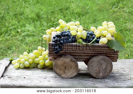 Big clusters of ripe green and blue grapes in a wooden cart against the background of a green grass