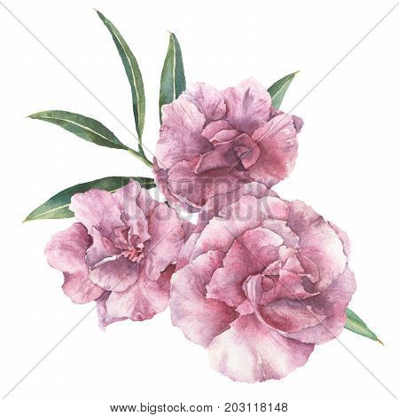 Watercolor floral bouquet. Hand painted oleander with leaves and branch isolated on white background. Botanical illustration for design, print, fabric