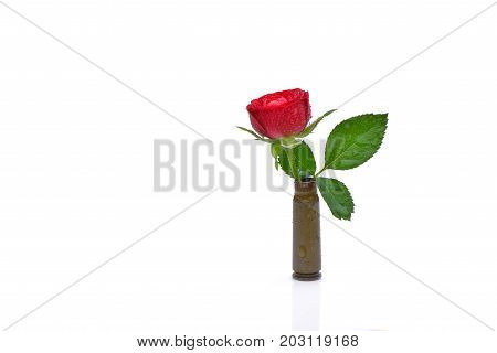 Red rose into a riffle bullet symbolizing flower power against isolated on white