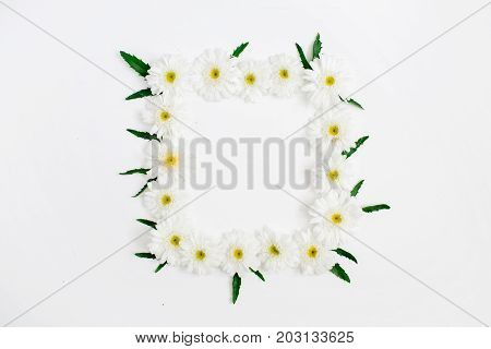 Floral frame made of white chamomile daisy flowers green leaves on white background. Flat lay top view. Daisy background. Frame of flower buds.